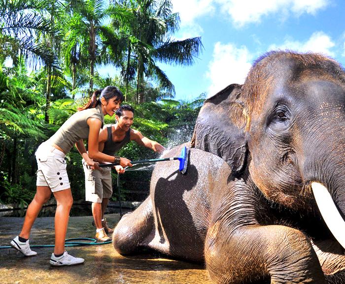Balade À Dos D'Éléphants - 1/2 J